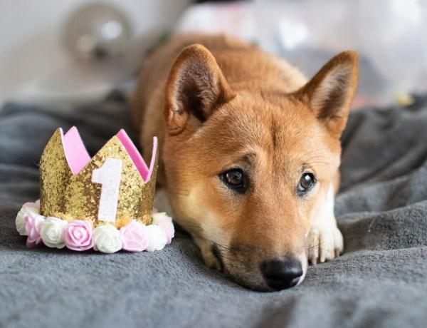 Happy Birthday Lotte