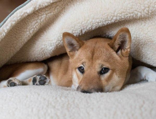 Lotte Hundehöhle Snuggle Dreamer