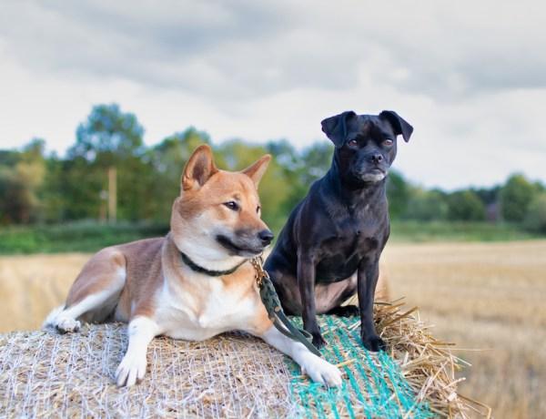 Leben mit zwei Hunden