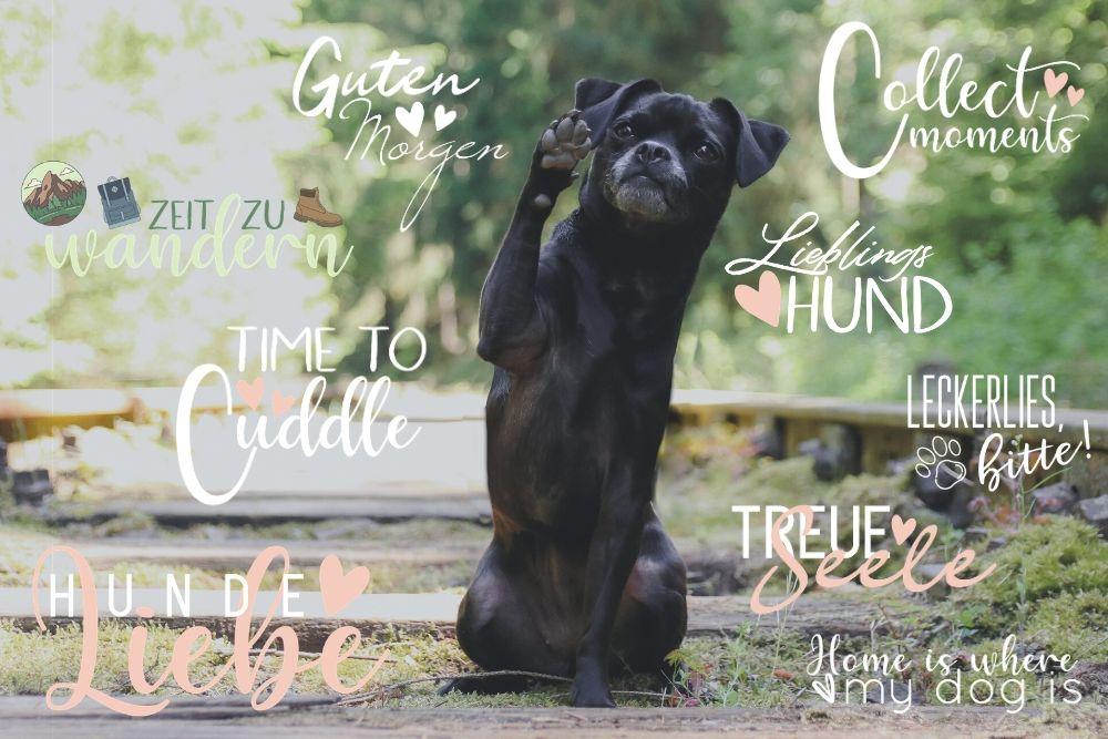 Story-Sticker für Hundebesitzer