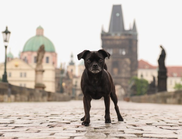 Nala Karlsbrücke Prag