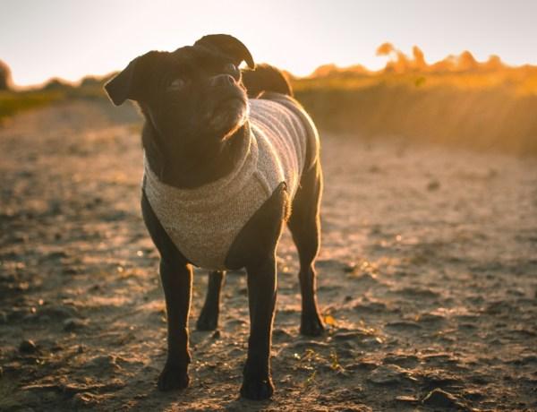 Hundemäntel für kleine Hunde Sofadogwear