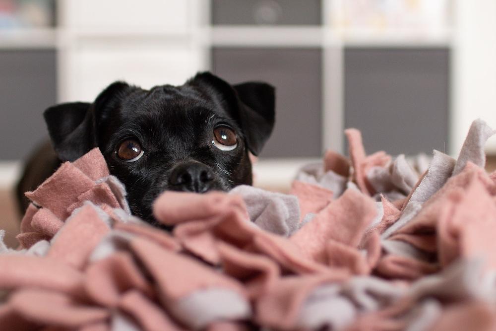 Hunde-Schnüffelteppich DIY