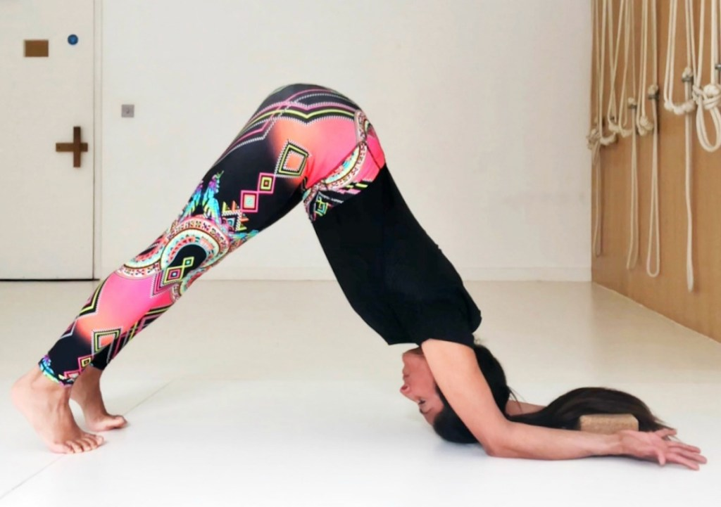 Asana Data: Downward Dealing With Forearm Canine Pose 2