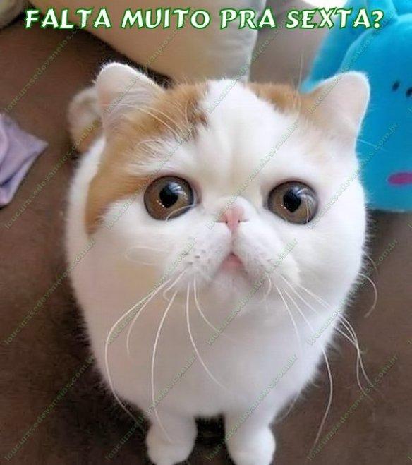 gato carinha sexta