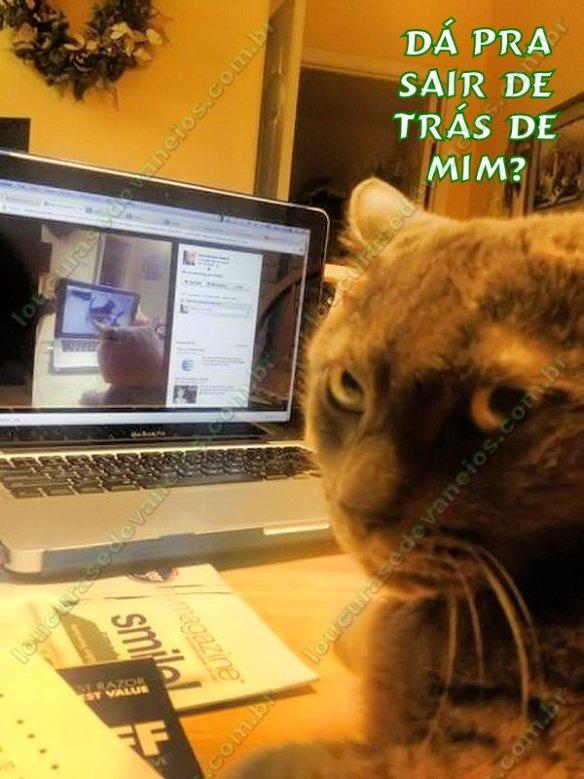 gato computador