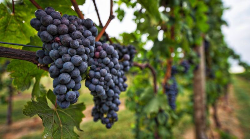 Local Winemakers to Acquire North Gate Vineyard - Loudoun Now