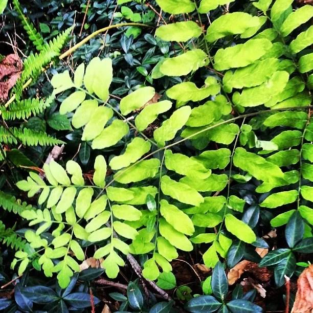 #fern #green #photography #pinelands