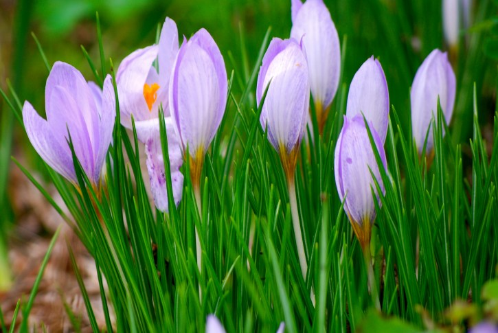 Varuna Garden