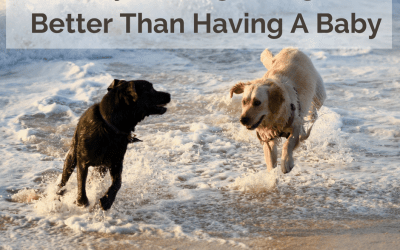 Why Getting A New Dog Is Better Than Having Another Baby