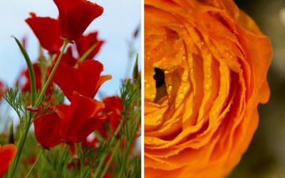 Midweek Moment #60: A Floral Feast