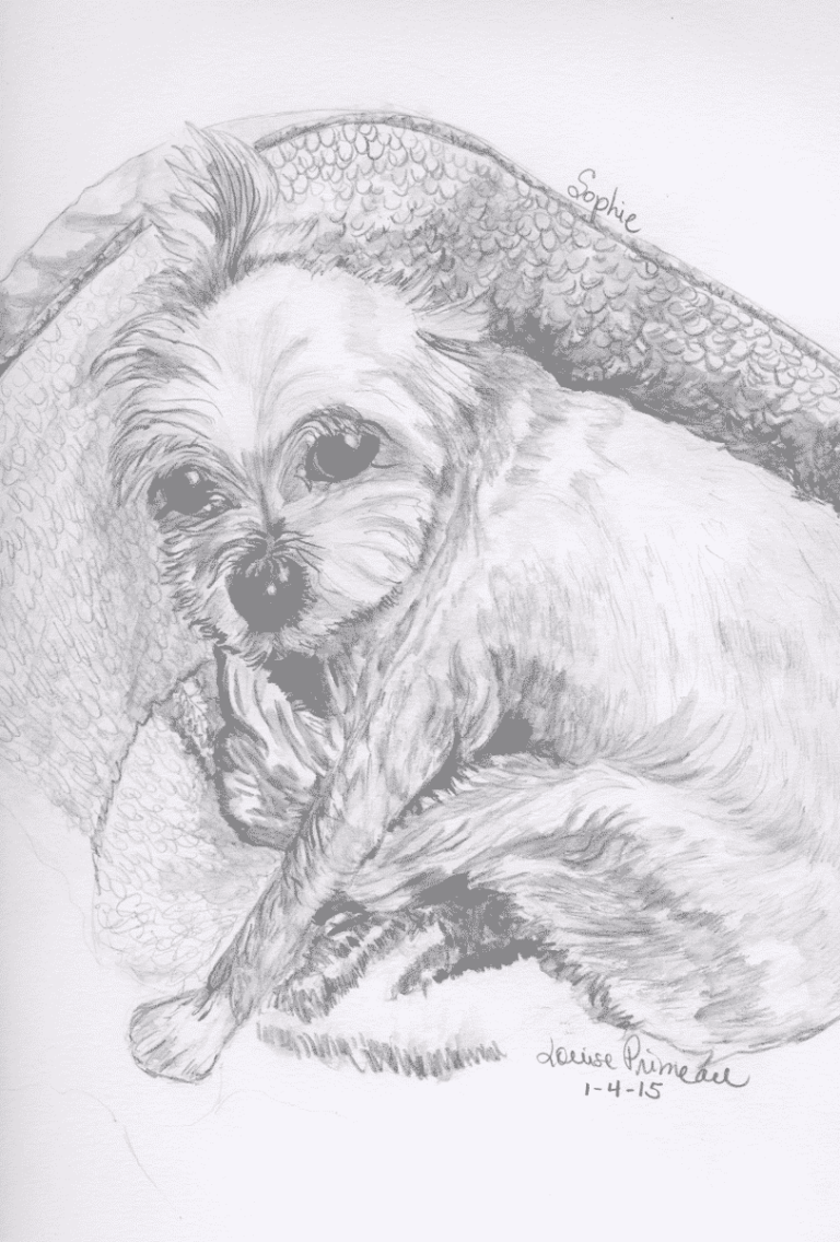 relaxed dog sketch