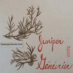 juniper in journal