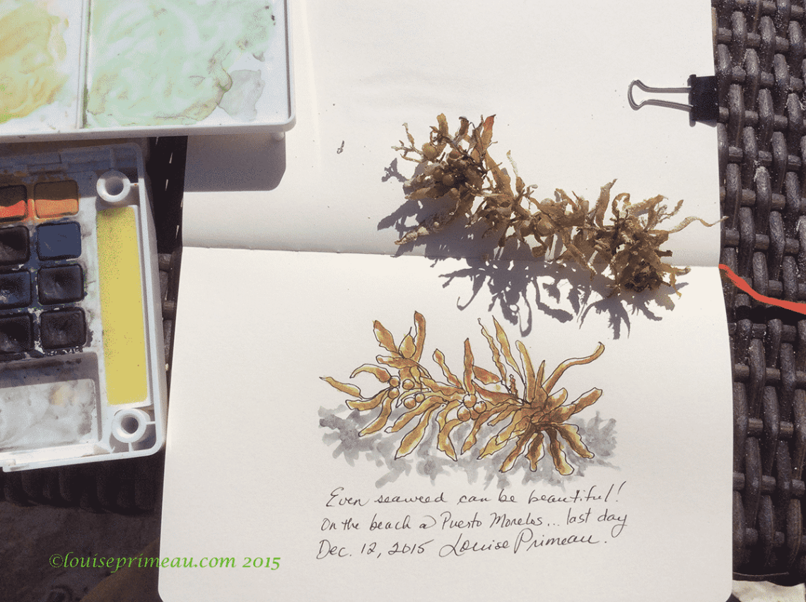 sketch of seaweed