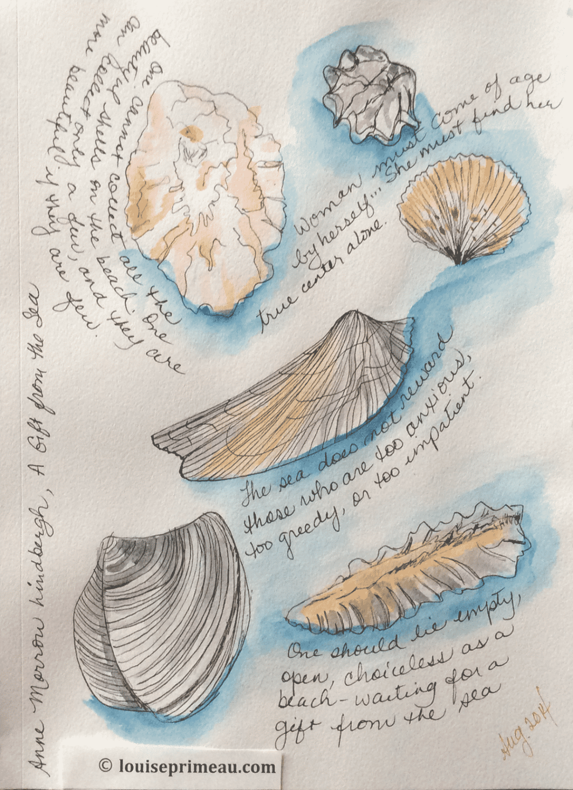 seashell sketch with quotations from Gift from the Sea