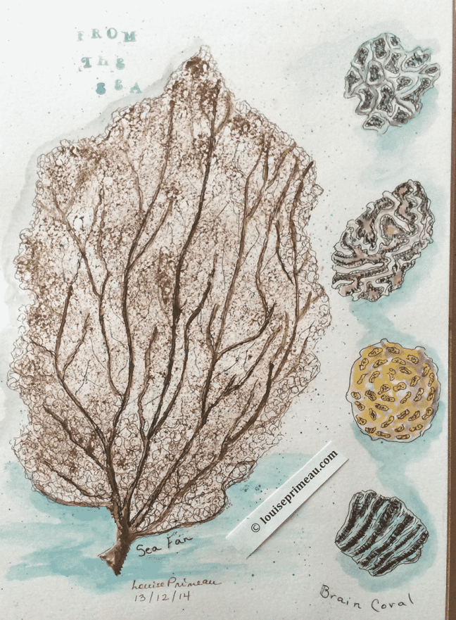sea coral in sketchbook