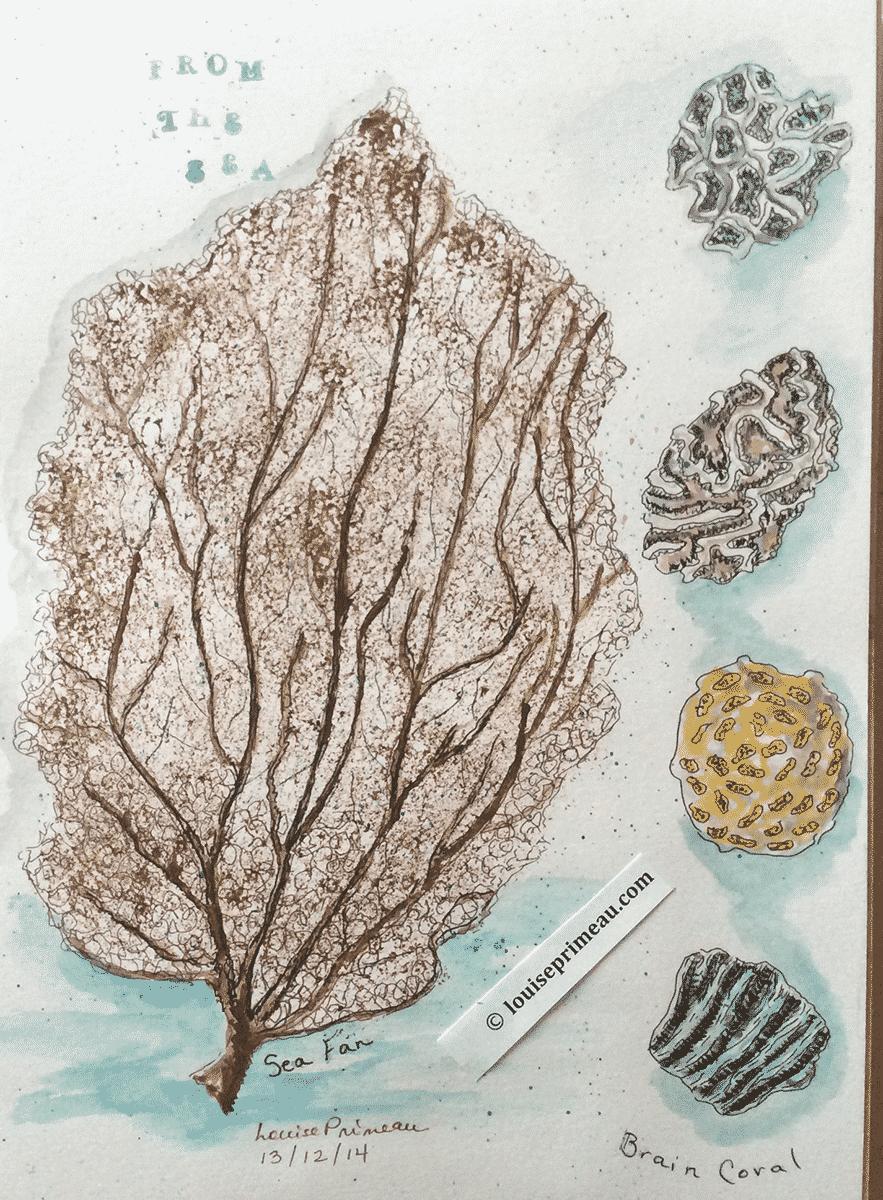 sea coral in sketchbook
