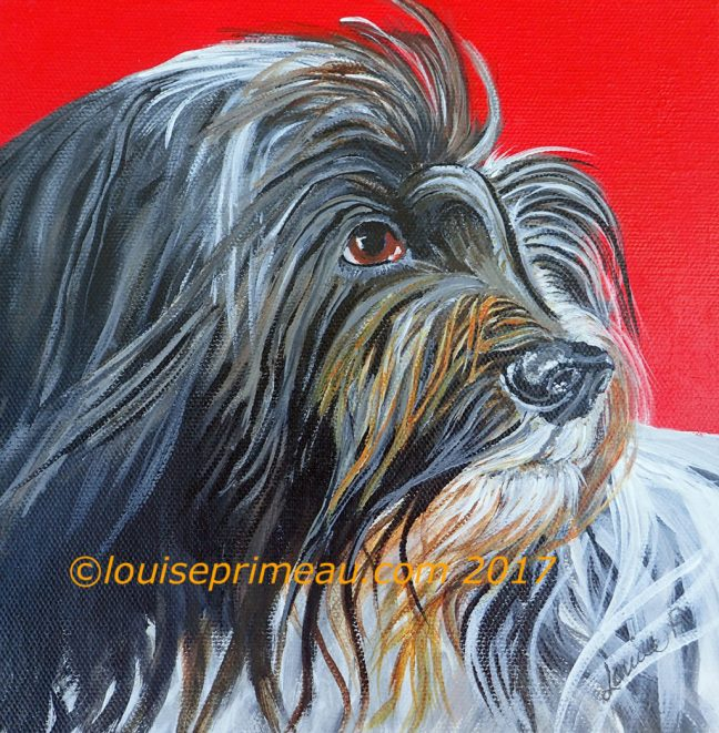 Schapendoes (Dutch Sheep Dog) acrylic painting 8 x 8 gallery wrapped canvas