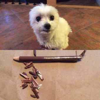 Meet the Artist - photograph of a guilty puppy