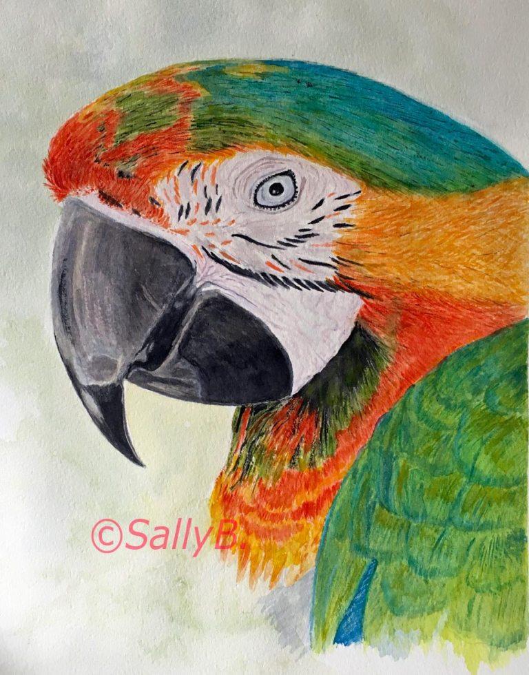 Sally Burke's parrot