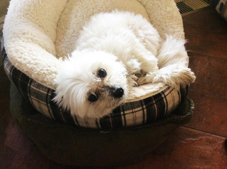 Lazy Sophie