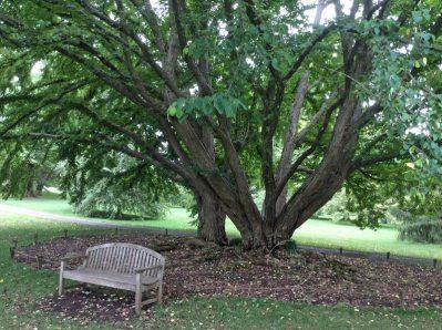 welcoming bench under huge trees at Chanticleer