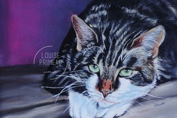 Pastel pet portrait by Louise's ARTiculations