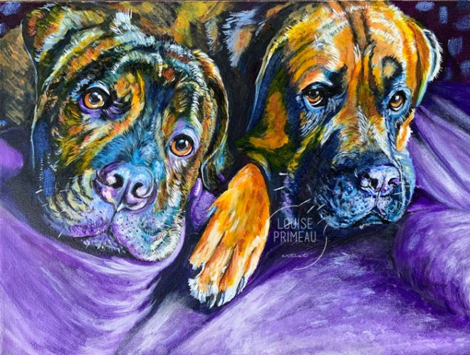 Tito and Luna, pet portraits by Louise Primeau