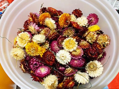 bucket of dried strawflowers