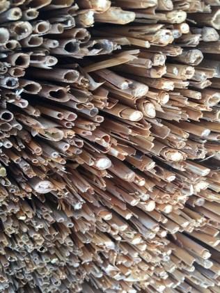 Bamboo- Japan