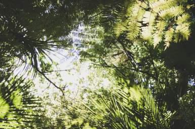 Waipoua Forest