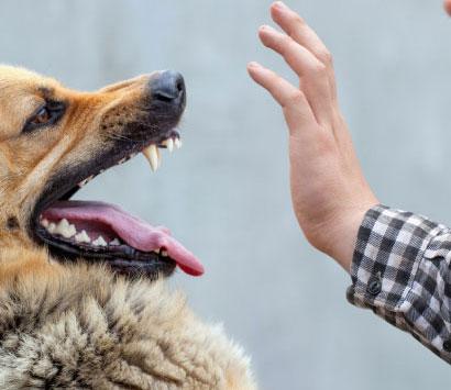Providence Dog Bite Attorney