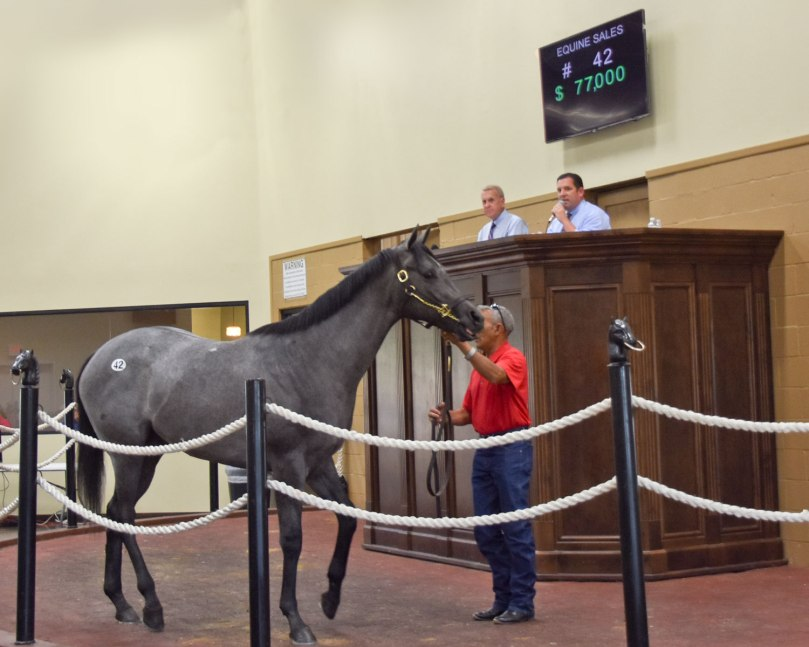 Equine Sales of Louisiana – Louisiana Thoroughbred Breeders Association