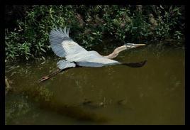 Kerry Griechen - My Eye Photography