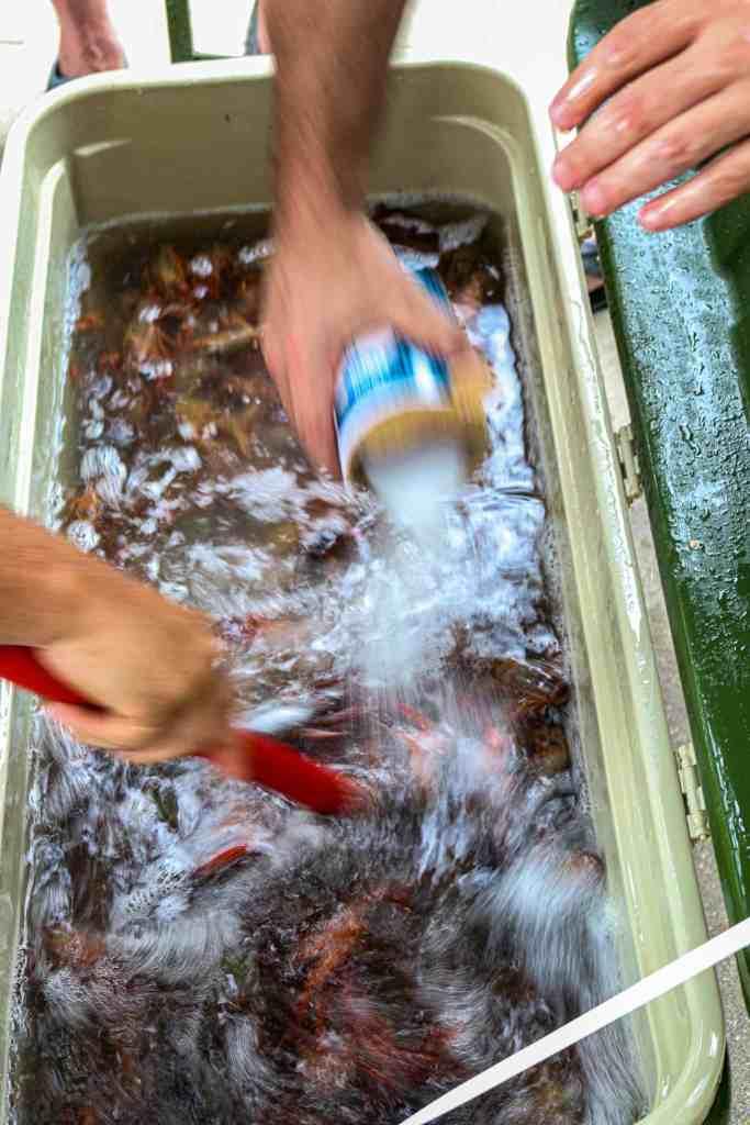 Salting live crawfish.