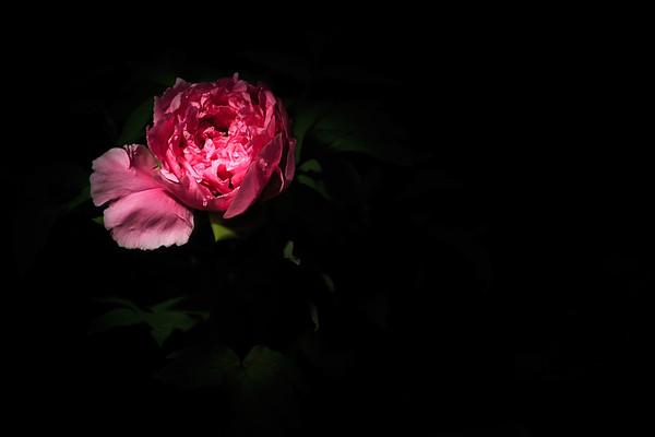 Le noir et la lumière pour faire de la belle photo (5/6)
