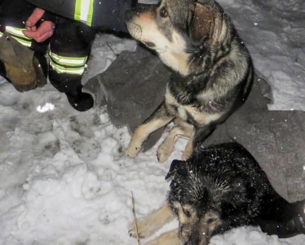 NUKKER LUGU: Võrumaal jäid kaks koera auto alla
