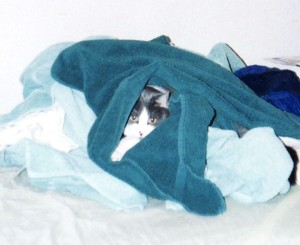 Nouchka the cat peeking out of a pile of clean towels