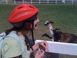 Lou Nell greeting llamas