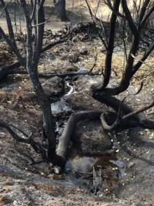 Scorched earth, tree, stream