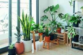 5 największych zalety posiadania roślin w domu