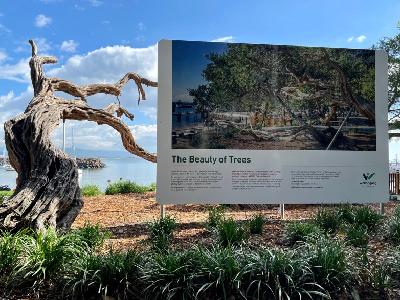 A damaged Coastal Tea Tree next to a sign with an earlier picture of the trees, with a title that reads: 'The Beauty of Trees'