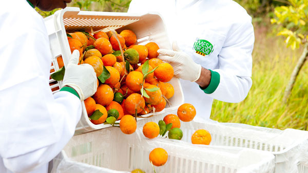Mesa Brasil Sesc - Lourenço Alimentos