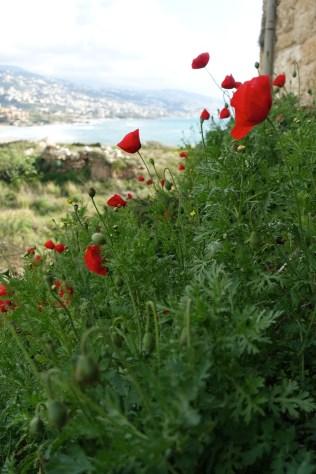 Poppies were everywhere