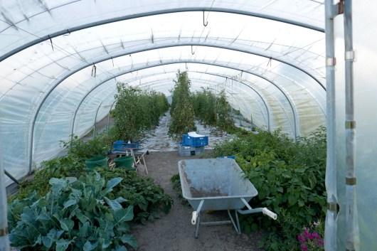 Greenhouse at Hertog Jan