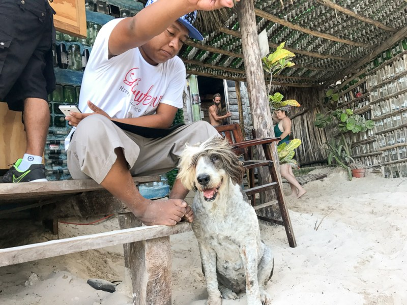 The dogs of Tulum
