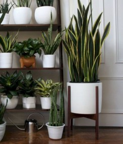 Popular Indoor Plant Stands Ideas For Fresh Home Inspiration 37