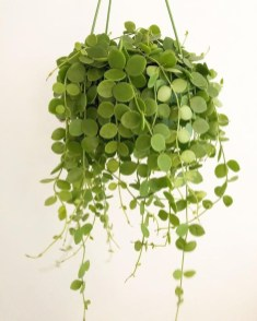 Affordable House Plants For Living Room Decoration 02
