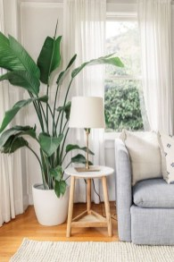 Affordable House Plants For Living Room Decoration 12