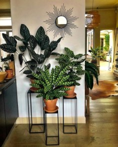 Affordable House Plants For Living Room Decoration 13